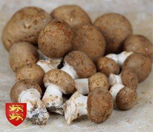 Champignons brun d'Orbec
