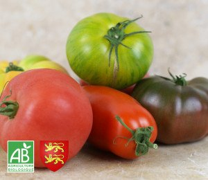 Tomate ancienne normande BIO