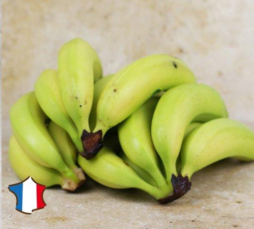 Lot de 12 bananes Planteur