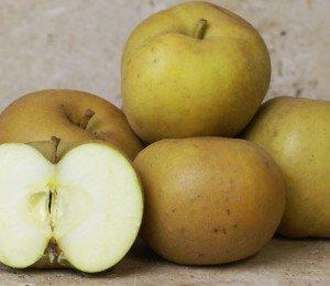 Pomme à compote (2kg)