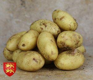 Pomme de terre nouvelle de Normandie