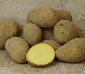 Pomme de terre ALLIANS de Pascal (chair ferme)