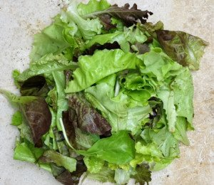 Mesclun de salade BIO